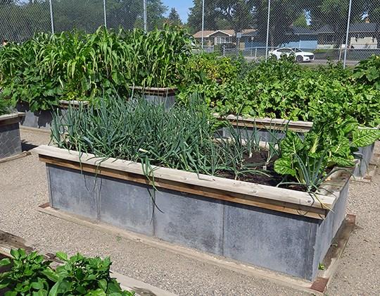 WMC Garden Program.jpg